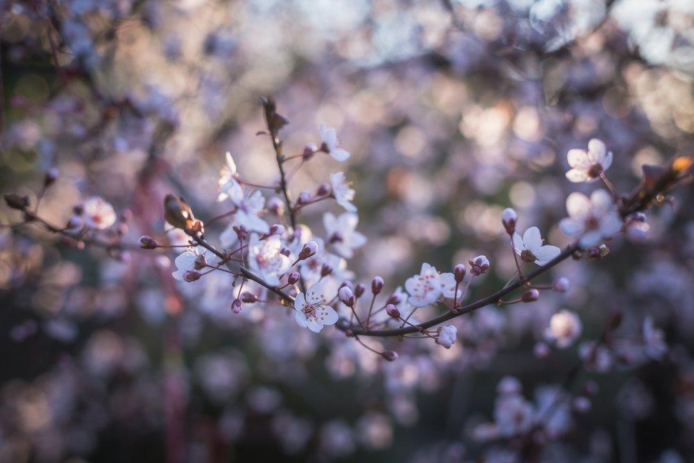 bloom-blooming-blossom-211451.jpg