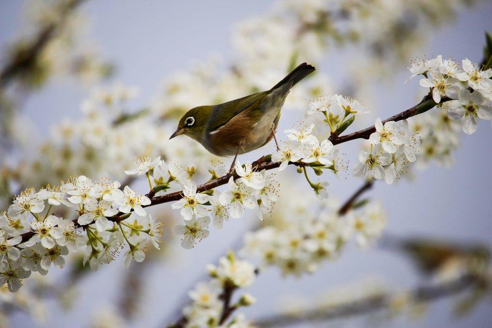 beautiful-bird-bloom-268496.jpg
