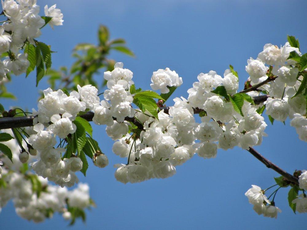 bloom-blossom-blossoms-62683.jpg
