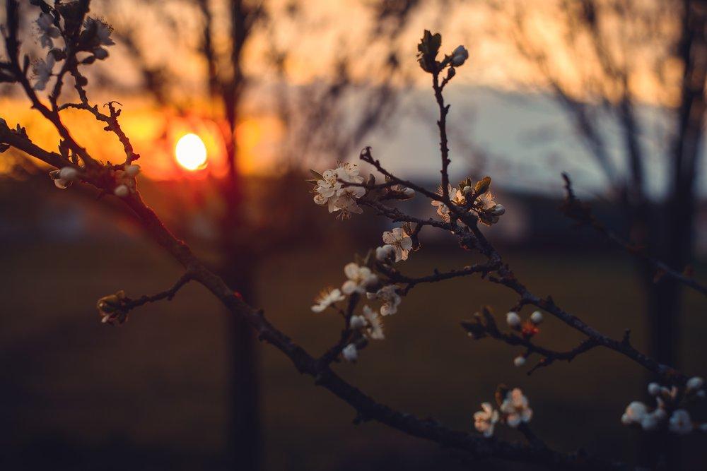 atmospheric-beautiful-blossom-1008405.jpg