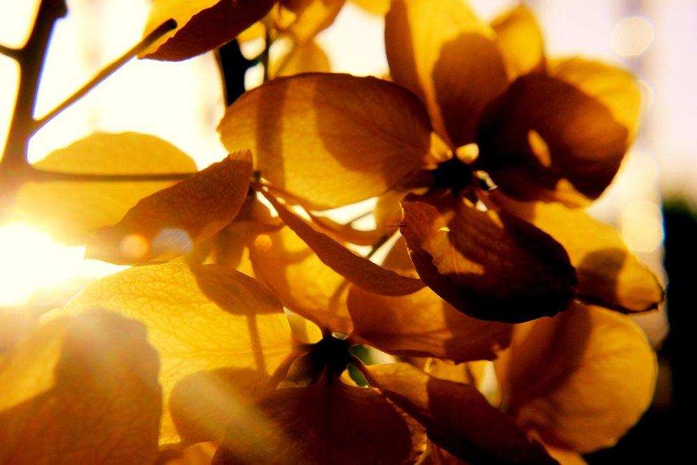 beautiful-bloom-blooming-640785.jpg