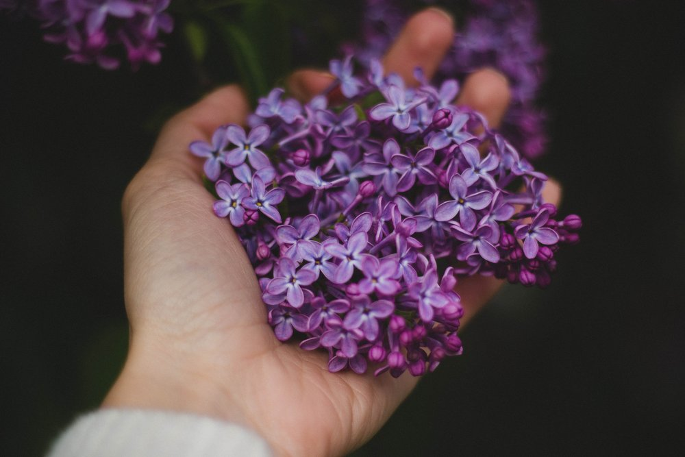 flowers-hand-lavender-14111.jpg