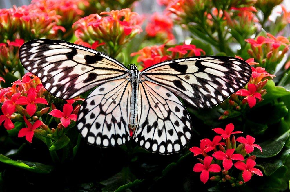 beautiful-bloom-blooming-268432.jpg