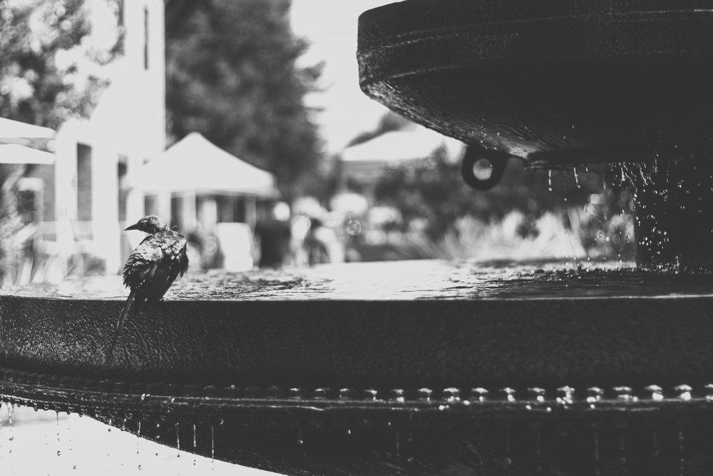bird-black-and-white-blurred-background-770221.jpg