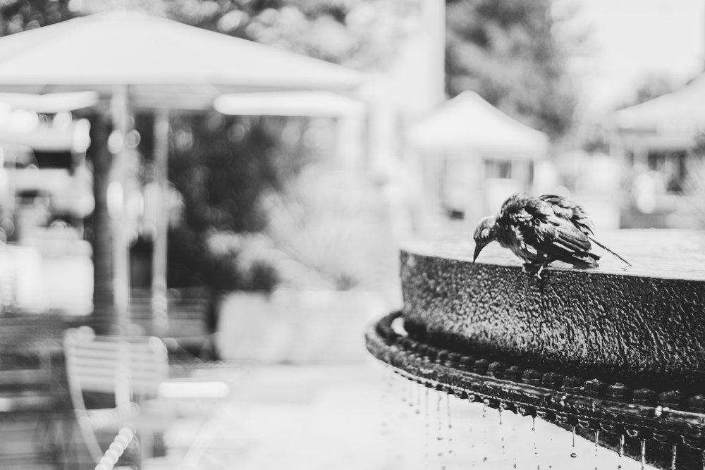 animal-bathing-bird-770233.jpg