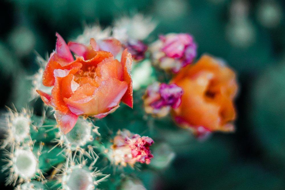 blooming-blossom-blurred-background-1253716.jpg