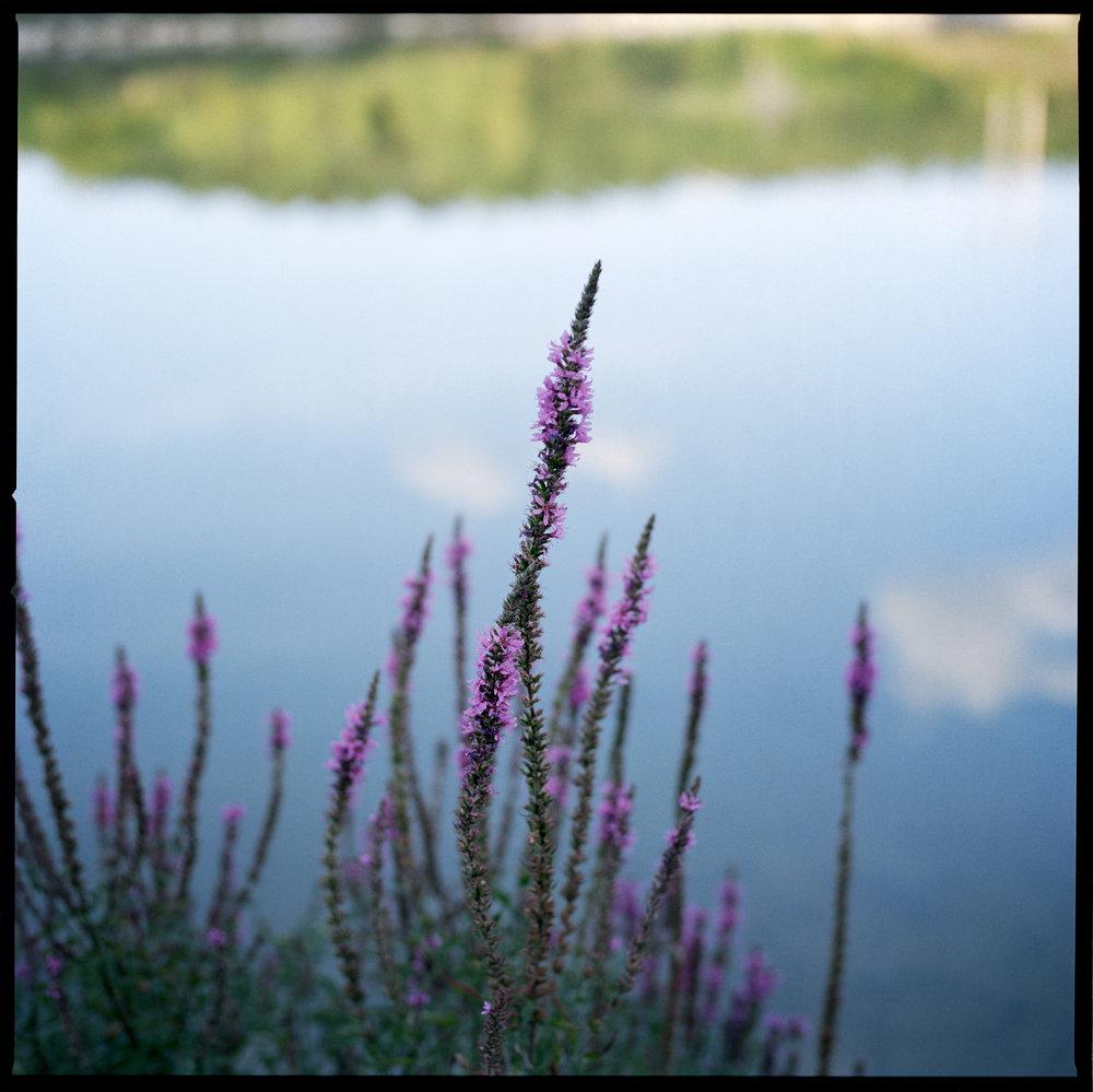 Nature_ 001.jpg