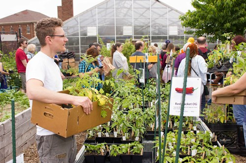 Plant Sale — Friends of Kilbourn Park Organic Greenhouse on green lavender, green beets, green bonsai, green bushes, green perennial, green garden design, green flowers, green tulips, green nature, green gardening, green shrubs, green butternut squash,