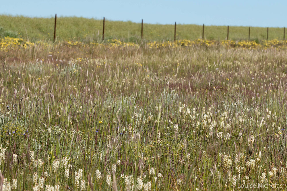 Fence-Wildflowers.jpg