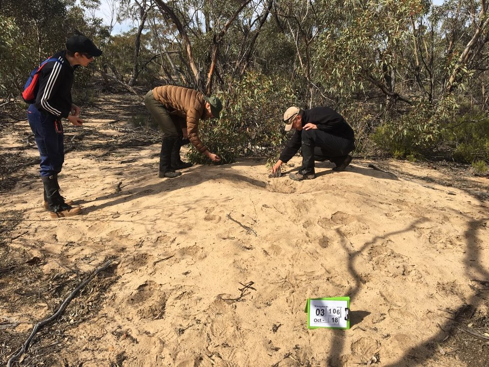 Myself, Kent and Michael (left to right) investigating tracks and scat on a Malleefowl mound. Photo: Tanya Loos.