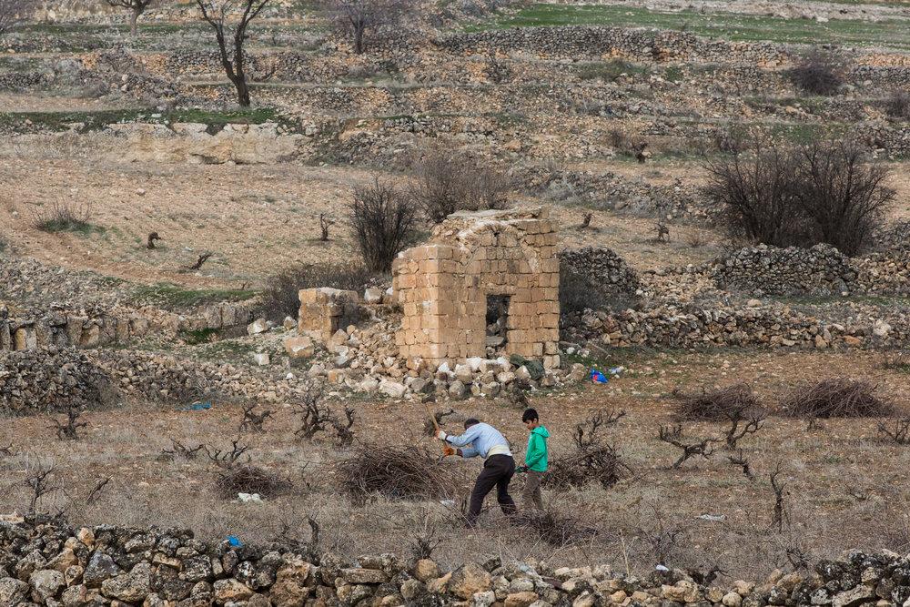 Tending the vineyards of Mor Hobil Monastery, Midyat.