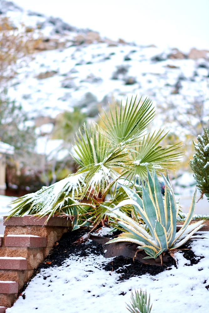 Snow-122-WEB.jpg
