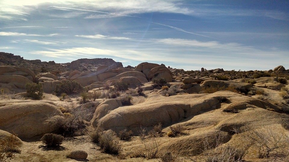 Joshua Tree National Park; birthplace of Mama Coyote and also my favorite National Park.
