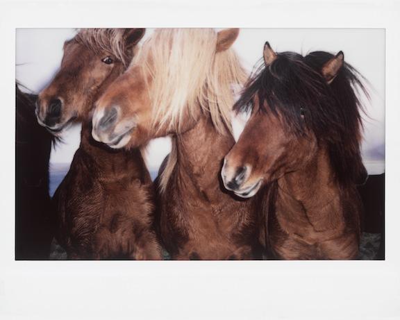 nick-turner-polaroid-print-readyversion 2.jpg