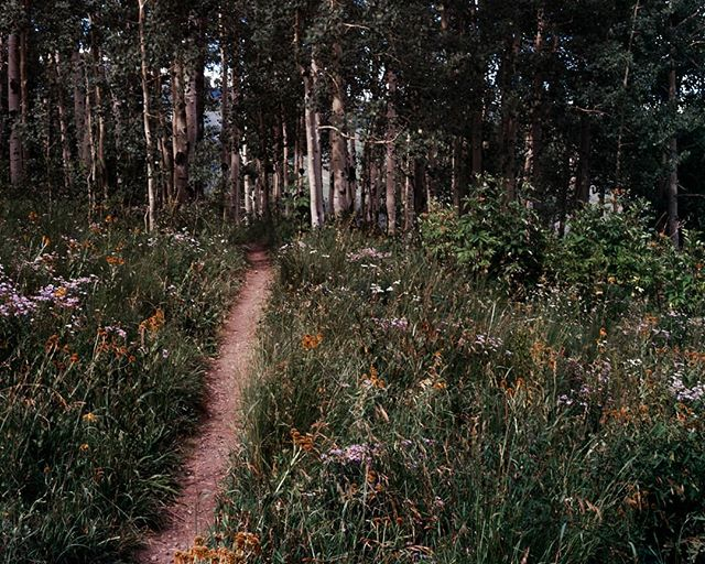 Wildflower lined path into an aspen grove. Count me in!