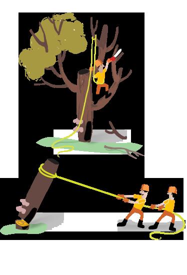 Toronto Tree Removal
