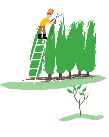 Toronto Tree Service Hedge Care Shrub Care