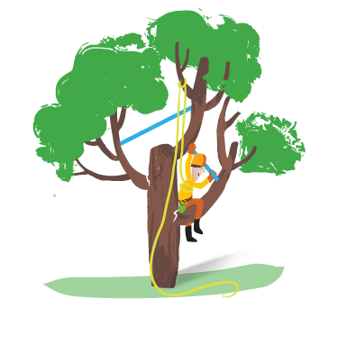 Tree Cabling Tree Bracing