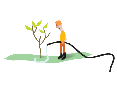 Tree and Shrub Planting