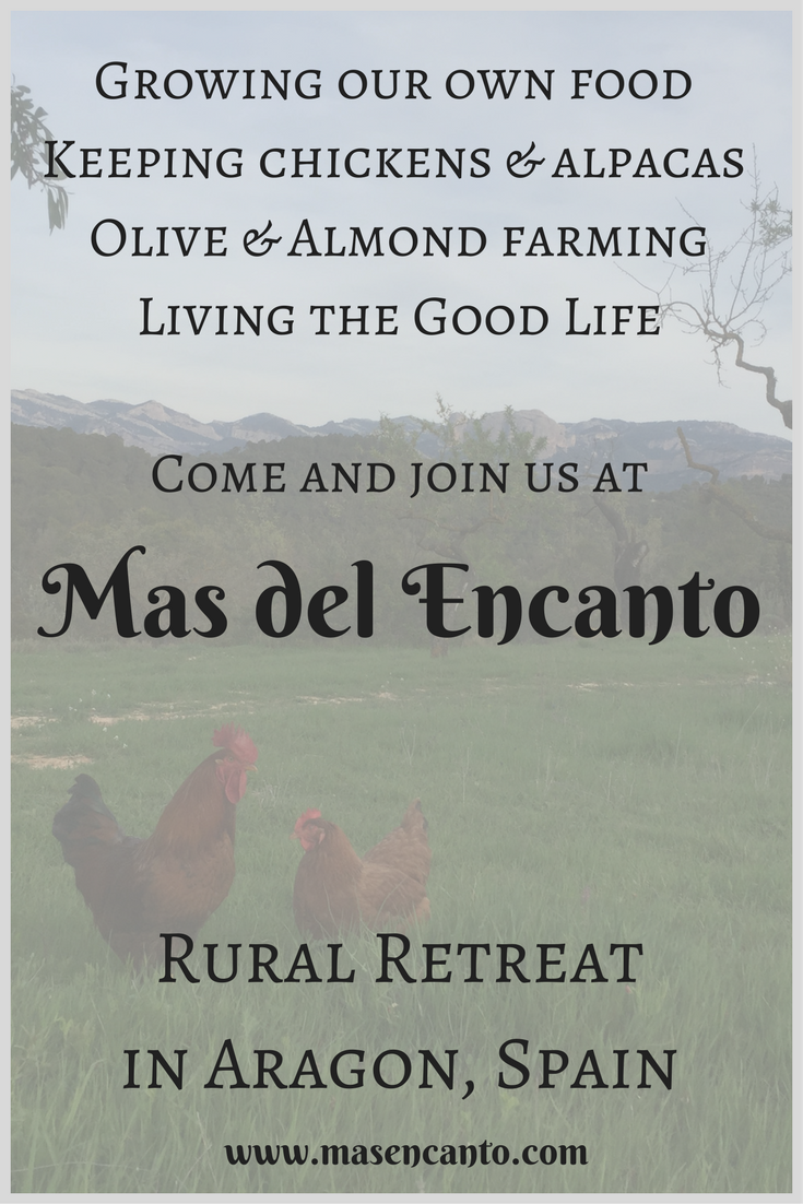 A fresh egg with your breakfast every day? Come and stay at Mas del Encanto, our tiny farm & rural retreat in Aragon, Spain!