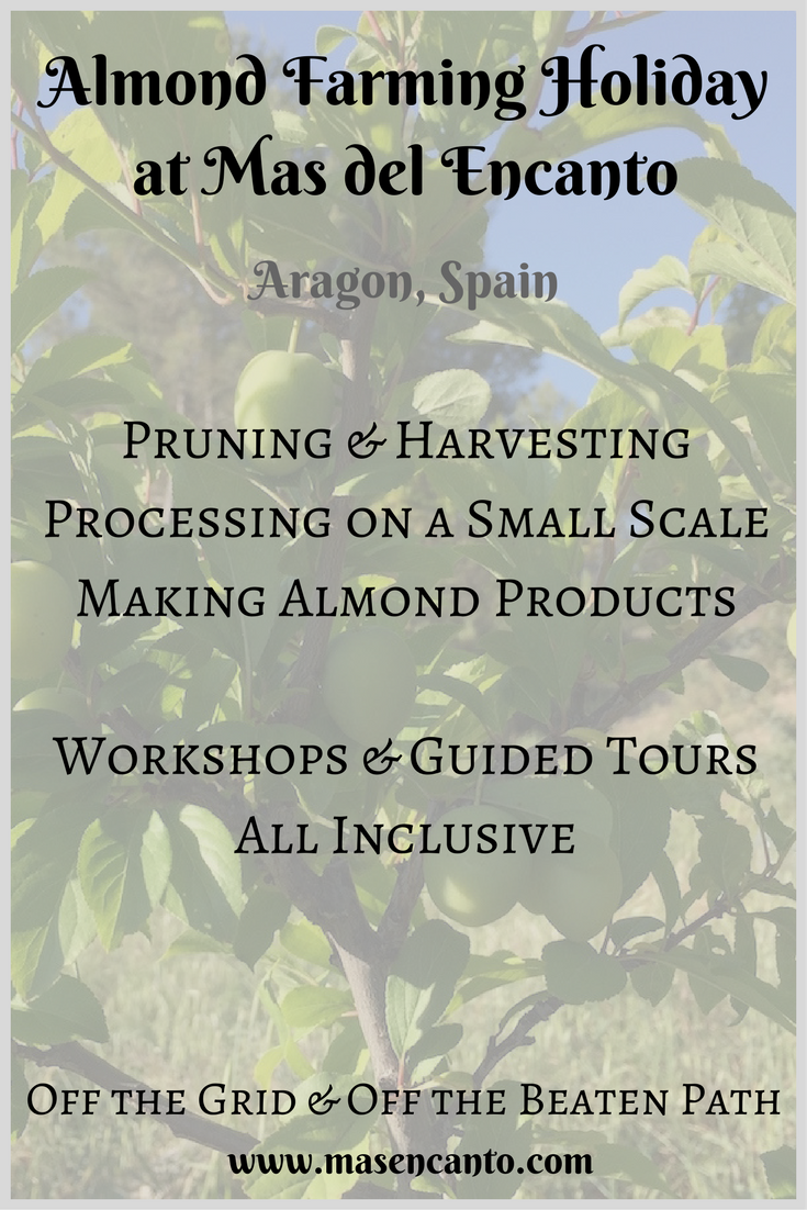Always wanted to participate in almond farming, see how almonds are harvested and processed, talk about and eat almonds all day long? Join our Almond Farming Holidays in the fall! At Mas del Encanto, our tiny farm and rural retreat in Aragon, Spain.