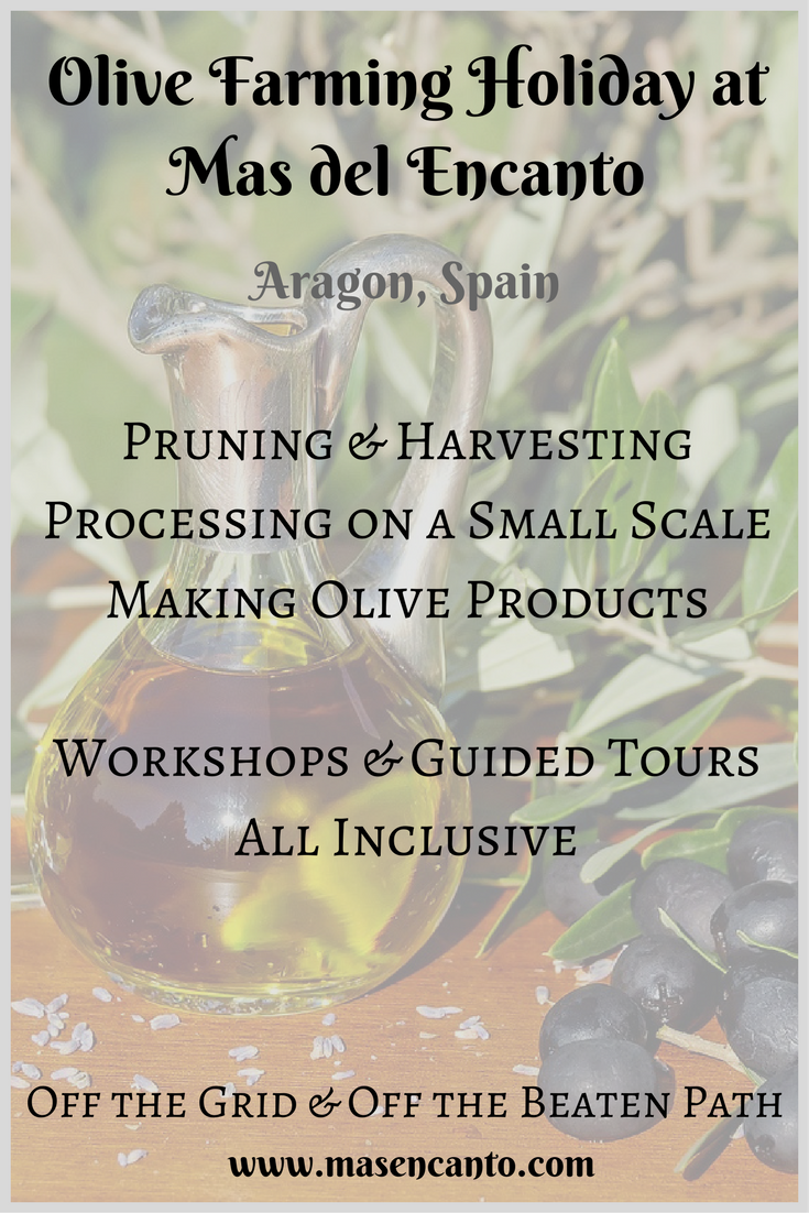 Always wanted to participate in olive farming, see how olives are harvested and processed, make olive oil and eating olives? Join our Olive Farming Holidays in the winter! At Mas del Encanto, our tiny farm and rural retreat in Aragon, Spain.