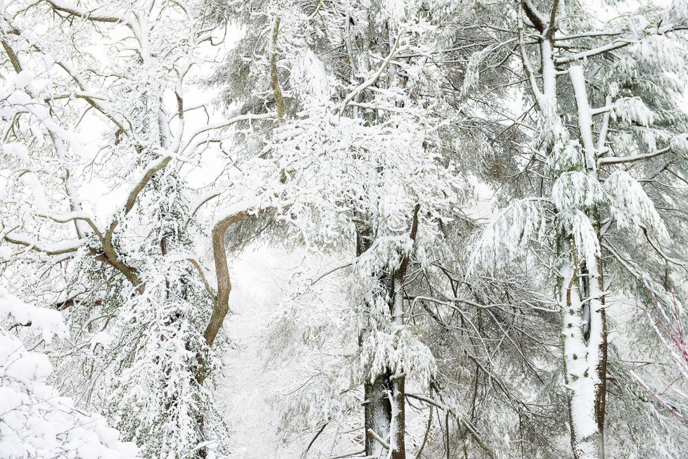 Frozen-026.jpg