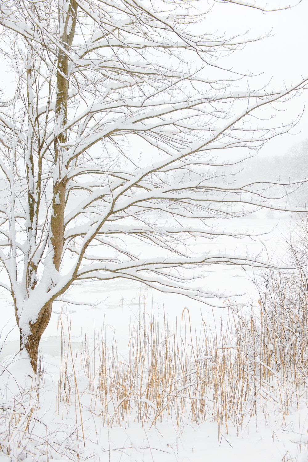 Frozen-029.jpg