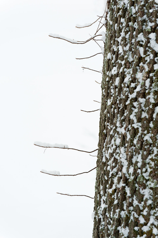 Frozen-030.jpg