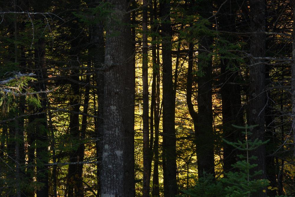 Foliage-006.jpg