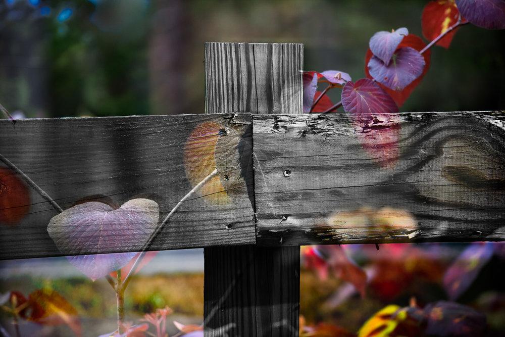 Fence-012.jpg
