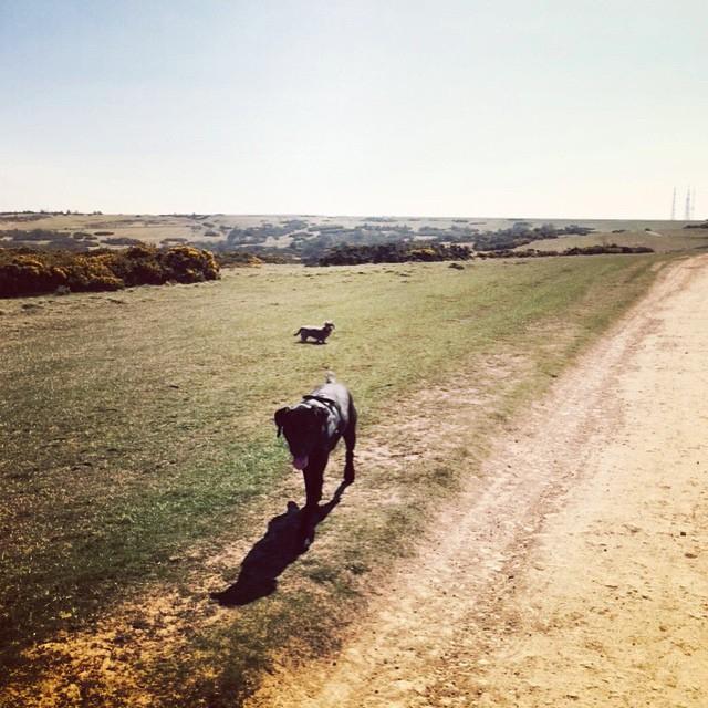 5c60e3499a4d0c7f-cleeve-hill-dog-walk-theinkcloset.jpg