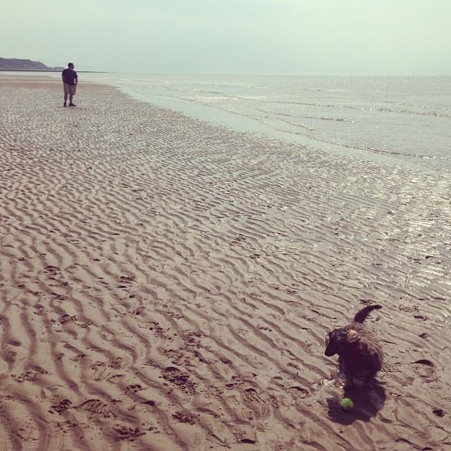d332fb88103ebd04-dachshund-st-bees-beach.jpg