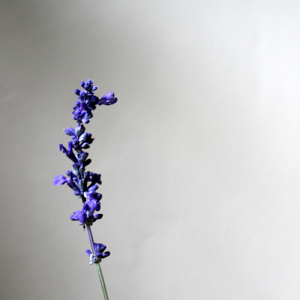 blue sage