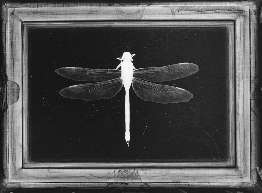 5large+dragonfly.jpg