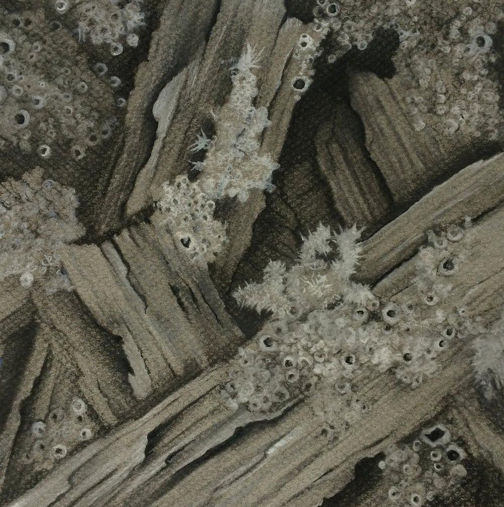 gray matter web