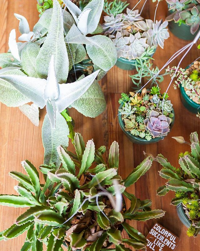 Whether you're looking to fill your Easter basket or your succulent basket, our makers have you covered! Shop your local creatives this Sunday at our special EASTER Flea at @armatureworks_tampa | 11-3 | 🌵 by @oberryssucculents 📸 by @becktastic