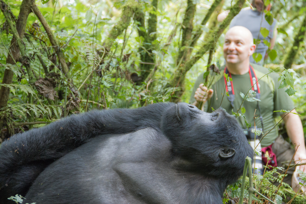 gorilla & jt.jpg
