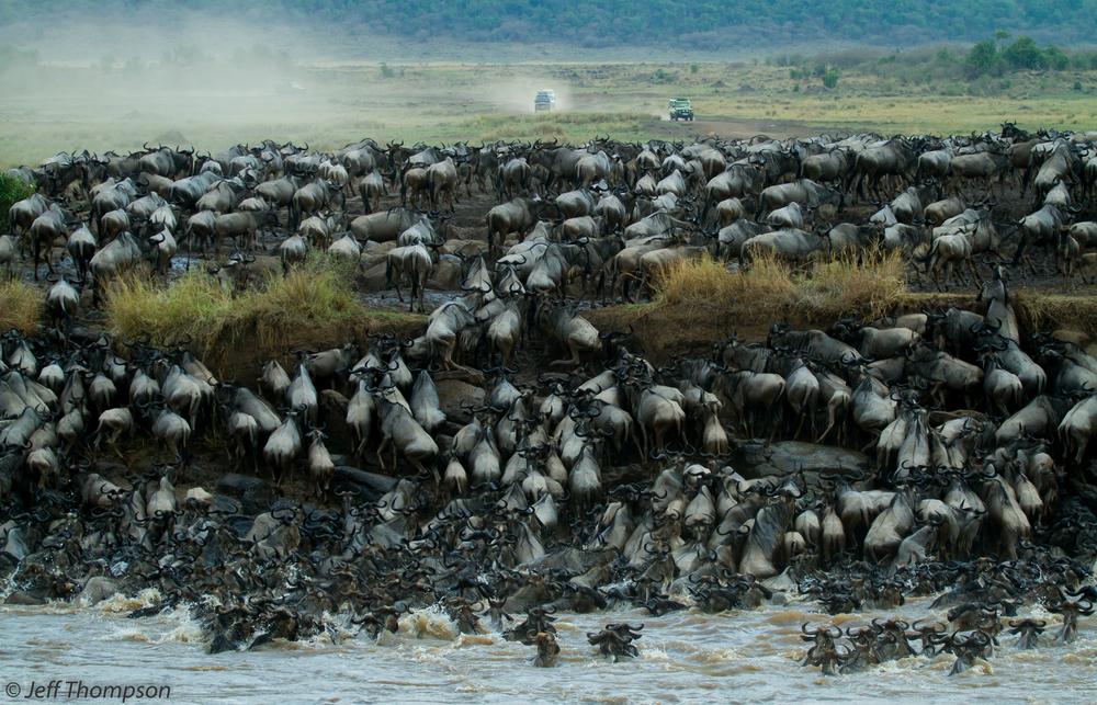 Mara Migration.jpg