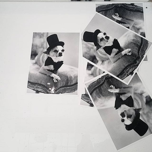 A very dapper good boi, straight out the washers. Photo from the archive of @bruce_weber  #chelseaphotographicservices #silvergelatinprints #darkroomprinter #darkroomservices #istillshootfilm #shootmorefilm #filmisback #filmisalive #kodak_photo #blackandwhite #blackandwhiteisalwaysright #printyourwork #archivalprints #oldschoolcool #inthedarkroom #analoguecommunity #filmcommunity #slowshutter