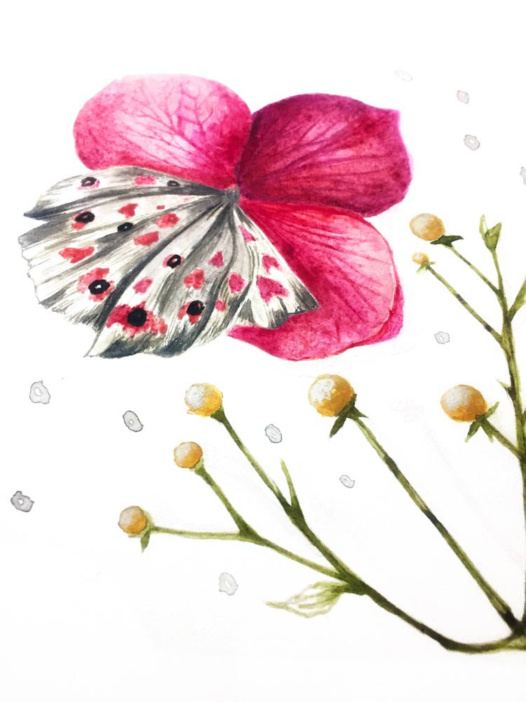 flower_close.jpg