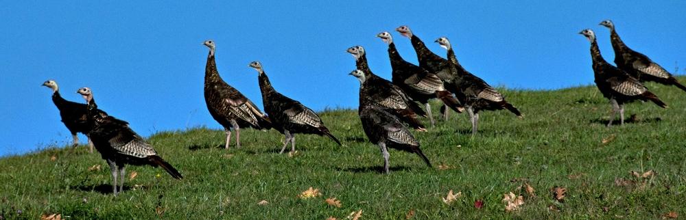 turkey run.jpg