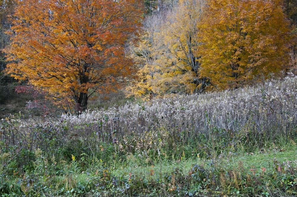 fall textures.jpg