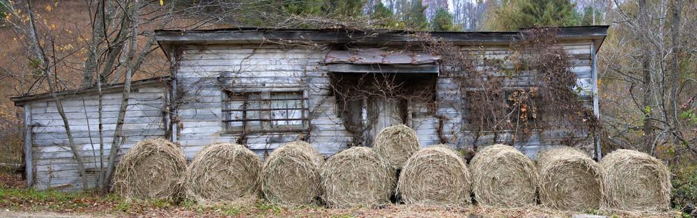hay n ivy shack.jpg