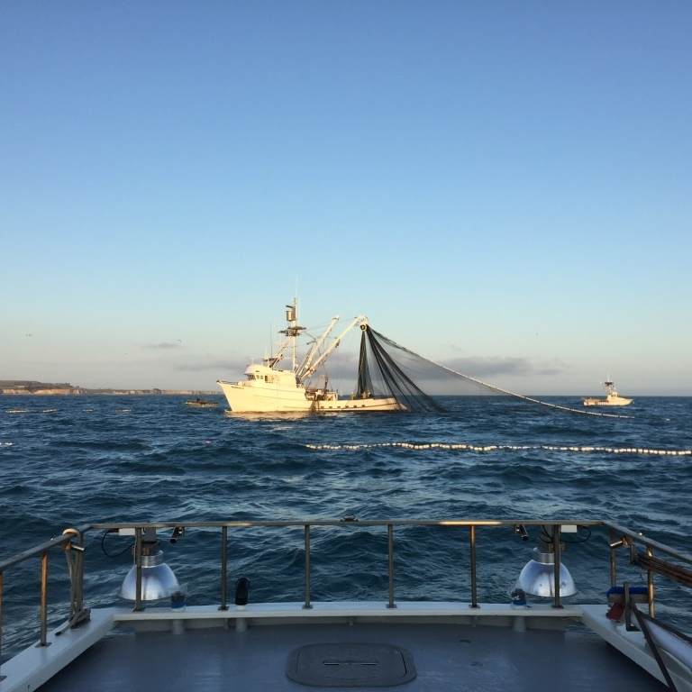 Barbara H hauling in the purse seine. Photo credit: David Haworth.