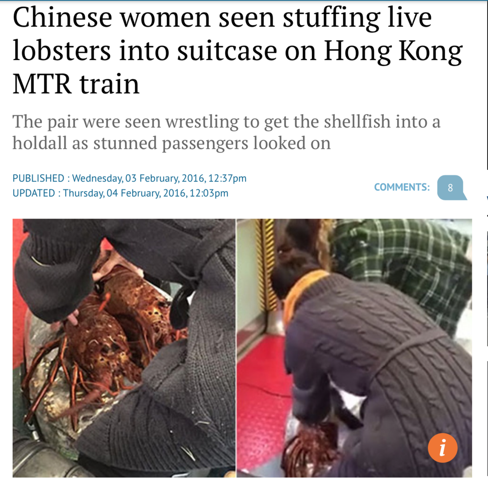 While I have heard that lobsters are typically smuggled in much larger quantities and most likely in a more secretive manner, this is an entertaining article, complete with video, of two women attempting to smuggle lobsters in their suitcase. In case you were ever considering it, this is not the way to pack a lobster.  http://www.scmp.com/news/hong-kong/article/1908840/chinese-women-seen-stuffing-live-lobsters-suitcase-hong-kong-mtr#comments