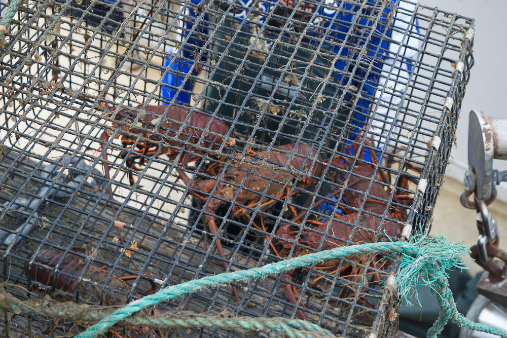 Local lobsters being unloaded straight off the boat, at the Tuna Harbor Dockside Market in San Diego last season.