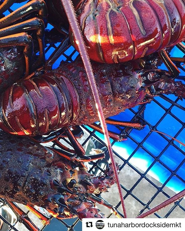 #Repost @tunaharbordocksidemkt with @repostapp ・・・ Lobster available again this Saturday! #sandiegoseafoodsaturdays #sandiego #freshfish #localseafood #pacifictoplate #whatsfordinner #fish #local #wefishwild #openairfishmarket #localandfresh #tunaharbordocksidemarket #eatlocal #caughtfresh #caughtlocal #supportfisherman
