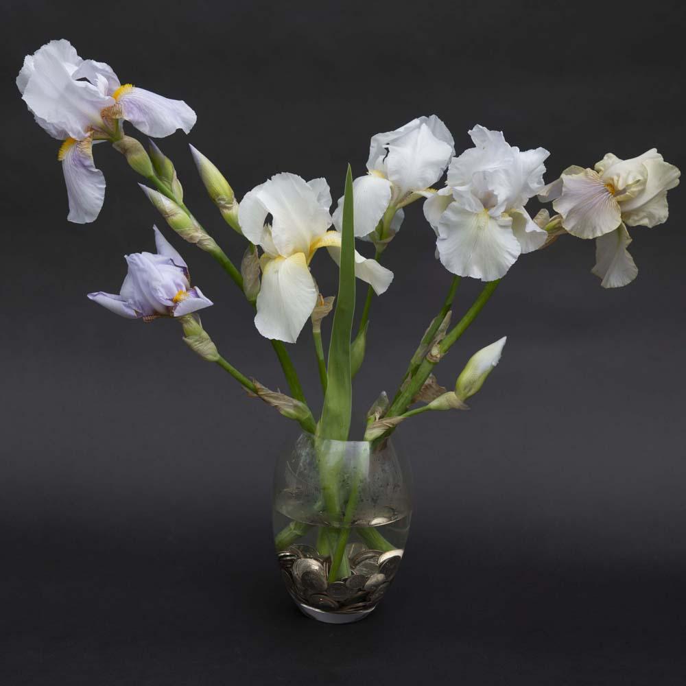 Irises White