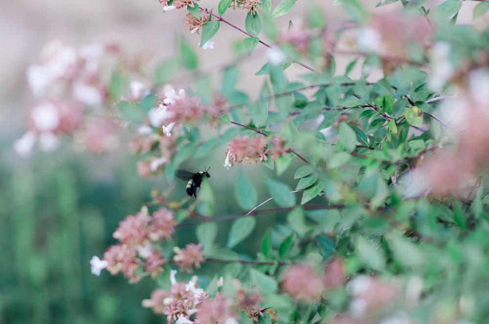 samantha whitford photography san grabriel park georgetown texas austin texas (3).jpg